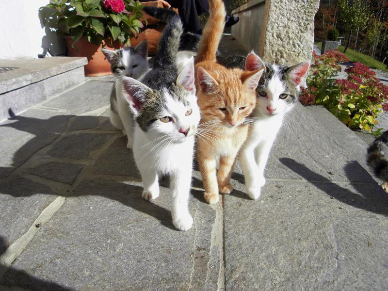 Haus Scheuerbichl - Unsere Katzen